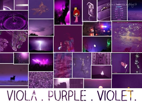 Viola in inglese purple